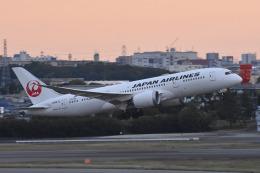 ITM44さんが、伊丹空港で撮影した日本航空 787-8 Dreamlinerの航空フォト(飛行機 写真・画像)
