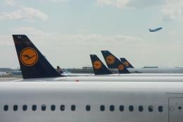 Hiro-hiroさんが、フランクフルト国際空港で撮影したルフトハンザドイツ航空 A321-231の航空フォト(飛行機 写真・画像)