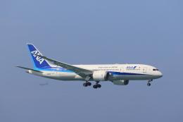 さんたまるたさんが、那覇空港で撮影した全日空 787-8 Dreamlinerの航空フォト(飛行機 写真・画像)