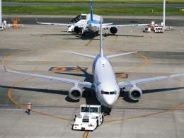 DVDさんが、羽田空港で撮影した全日空 737-881の航空フォト(飛行機 写真・画像)
