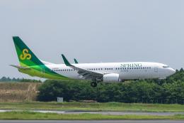 らむえあたーびんさんが、成田国際空港で撮影した春秋航空日本 737-8ALの航空フォト(飛行機 写真・画像)