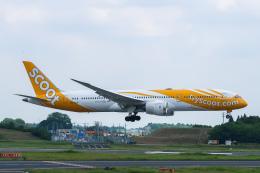 らむえあたーびんさんが、成田国際空港で撮影したスクート 787-9の航空フォト(飛行機 写真・画像)