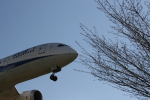 aki@ヒコーキ大好き少年さんが、羽田空港で撮影した全日空 787-8 Dreamlinerの航空フォト(飛行機 写真・画像)