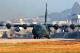 ハミングバードさんが、名古屋飛行場で撮影した航空自衛隊 C-130H Herculesの航空フォト(飛行機 写真・画像)
