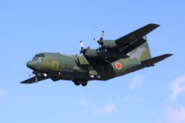 taikirikioさんが、岐阜基地で撮影した航空自衛隊 C-130H Herculesの航空フォト(飛行機 写真・画像)