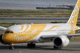 344さんが、関西国際空港で撮影したスクート (〜2017) 787-8 Dreamlinerの航空フォト(飛行機 写真・画像)