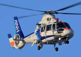 YouKeyさんが、札幌飛行場で撮影したオールニッポンヘリコプター AS365N2 Dauphin 2の航空フォト(飛行機 写真・画像)