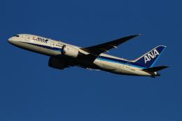 twining07さんが、羽田空港で撮影した全日空 787-8 Dreamlinerの航空フォト(飛行機 写真・画像)