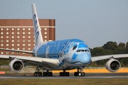 モモさんが、成田国際空港で撮影した全日空 A380-841の航空フォト(飛行機 写真・画像)