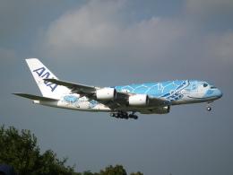 もっちゃこさんが、成田国際空港で撮影した全日空 A380-841の航空フォト(飛行機 写真・画像)