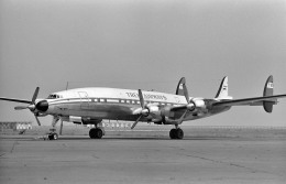 wetwingさんが、羽田空港で撮影したTREK AIRWAYS L-1649A Starlinerの航空フォト(飛行機 写真・画像)