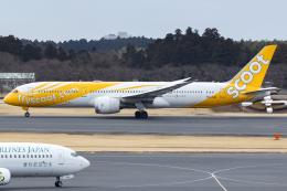 KoshiTomoさんが、成田国際空港で撮影したスクート (〜2017) 787-9の航空フォト(飛行機 写真・画像)