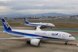 NH642さんが、福岡空港で撮影した全日空 787-8 Dreamlinerの航空フォト(飛行機 写真・画像)