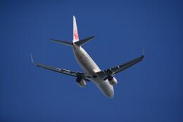 brasovさんが、羽田空港で撮影した日本航空 737-846の航空フォト(飛行機 写真・画像)