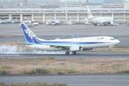 ceskykrumlovさんが、羽田空港で撮影した全日空 737-881の航空フォト(飛行機 写真・画像)