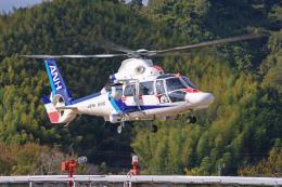 apphgさんが、静岡ヘリポートで撮影したオールニッポンヘリコプター AS365N3 Dauphin 2の航空フォト(飛行機 写真・画像)