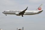 @たかひろさんが、伊丹空港で撮影した日本航空 737-846の航空フォト(飛行機 写真・画像)