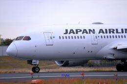 キットカットさんが、伊丹空港で撮影した日本航空 787-8 Dreamlinerの航空フォト(飛行機 写真・画像)