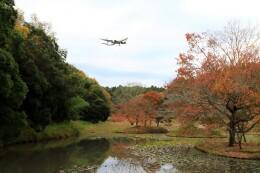 ☆ライダーさんが、成田国際空港で撮影した全日空 767-381F/ERの航空フォト(飛行機 写真・画像)