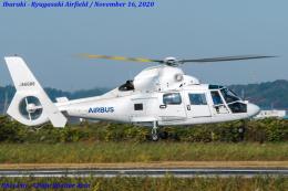 Chofu Spotter Ariaさんが、龍ケ崎飛行場で撮影したエアバス・ヘリコプターズ・ジャパン AS365N2 Dauphin 2の航空フォト(飛行機 写真・画像)