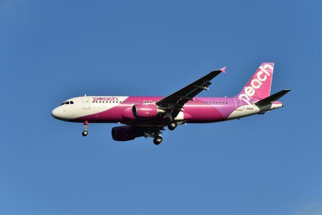 yotaさんが、成田国際空港で撮影したピーチ A320-214の航空フォト(飛行機 写真・画像)