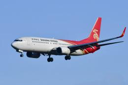 パンダさんが、成田国際空港で撮影した深圳航空 737-87Lの航空フォト(飛行機 写真・画像)