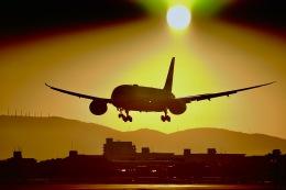 monjiro22001さんが、伊丹空港で撮影した全日空 787-8 Dreamlinerの航空フォト(飛行機 写真・画像)