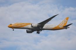 OS52さんが、成田国際空港で撮影したスクート 787-9の航空フォト(飛行機 写真・画像)