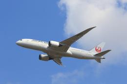 ゆう.さんが、成田国際空港で撮影した日本航空 787-8 Dreamlinerの航空フォト(飛行機 写真・画像)