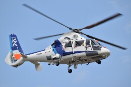 とびたさんが、名古屋飛行場で撮影したオールニッポンヘリコプター AS365N2 Dauphin 2の航空フォト(飛行機 写真・画像)
