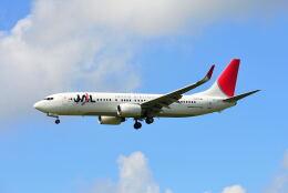 航空フォト:JA317J 日本航空 737-800