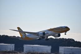 セッキーさんが、成田国際空港で撮影したスクート 787-9の航空フォト(飛行機 写真・画像)