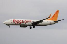 フッ軽の極美さんが、フランクフルト国際空港で撮影したペガサス・エアラインズ 737-86Nの航空フォト(飛行機 写真・画像)