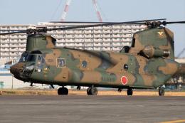 KANTO61さんが、立川飛行場で撮影した陸上自衛隊 CH-47Jの航空フォト(飛行機 写真・画像)