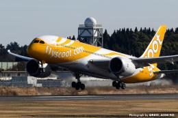 kina309さんが、成田国際空港で撮影したスクート 787-8 Dreamlinerの航空フォト(飛行機 写真・画像)