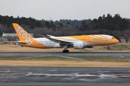 フッ軽の極美さんが、成田国際空港で撮影したスクート 787-8 Dreamlinerの航空フォト(飛行機 写真・画像)