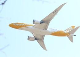 不揃いさんが、成田国際空港で撮影したスクート 787-8 Dreamlinerの航空フォト(飛行機 写真・画像)