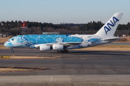とらとらさんが、成田国際空港で撮影した全日空 A380-841の航空フォト(飛行機 写真・画像)