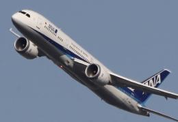 新城 JAL alpha rainbowさんが、伊丹空港で撮影した全日空 787-8 Dreamlinerの航空フォト(飛行機 写真・画像)