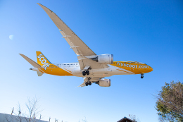 SGR RT 改さんが、成田国際空港で撮影したスクート 787-8 Dreamlinerの航空フォト(飛行機 写真・画像)