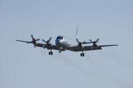 ぼくちゃんさんが、厚木飛行場で撮影したオーストラリア空軍 P-3C Orionの航空フォト(飛行機 写真・画像)