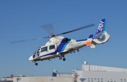 ヘリオスさんが、東京ヘリポートで撮影したオールニッポンヘリコプター AS365N2 Dauphin 2の航空フォト(飛行機 写真・画像)