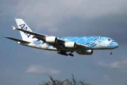 G-BNLYさんが、成田国際空港で撮影した全日空 A380-841の航空フォト(飛行機 写真・画像)