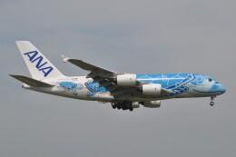 Flying A340さんが、成田国際空港で撮影した全日空 A380-841の航空フォト(飛行機 写真・画像)
