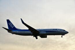 天心さんが、伊丹空港で撮影した全日空 737-8ALの航空フォト(飛行機 写真・画像)
