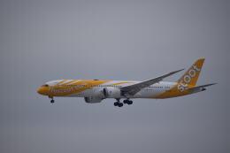 hachiさんが、成田国際空港で撮影したスクート 787-9の航空フォト(飛行機 写真・画像)