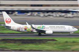 三軒 那乃さんが、羽田空港で撮影した日本航空 737-846の航空フォト(飛行機 写真・画像)