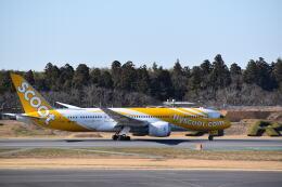 hachiさんが、成田国際空港で撮影したスクート 787-8 Dreamlinerの航空フォト(飛行機 写真・画像)