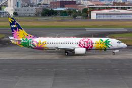 (新)ふぁんとむ改さんが、宮崎空港で撮影したスカイネットアジア航空 737-4Y0の航空フォト(飛行機 写真・画像)
