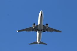 フレッシュマリオさんが、羽田空港で撮影した日本航空 737-846の航空フォト(飛行機 写真・画像)